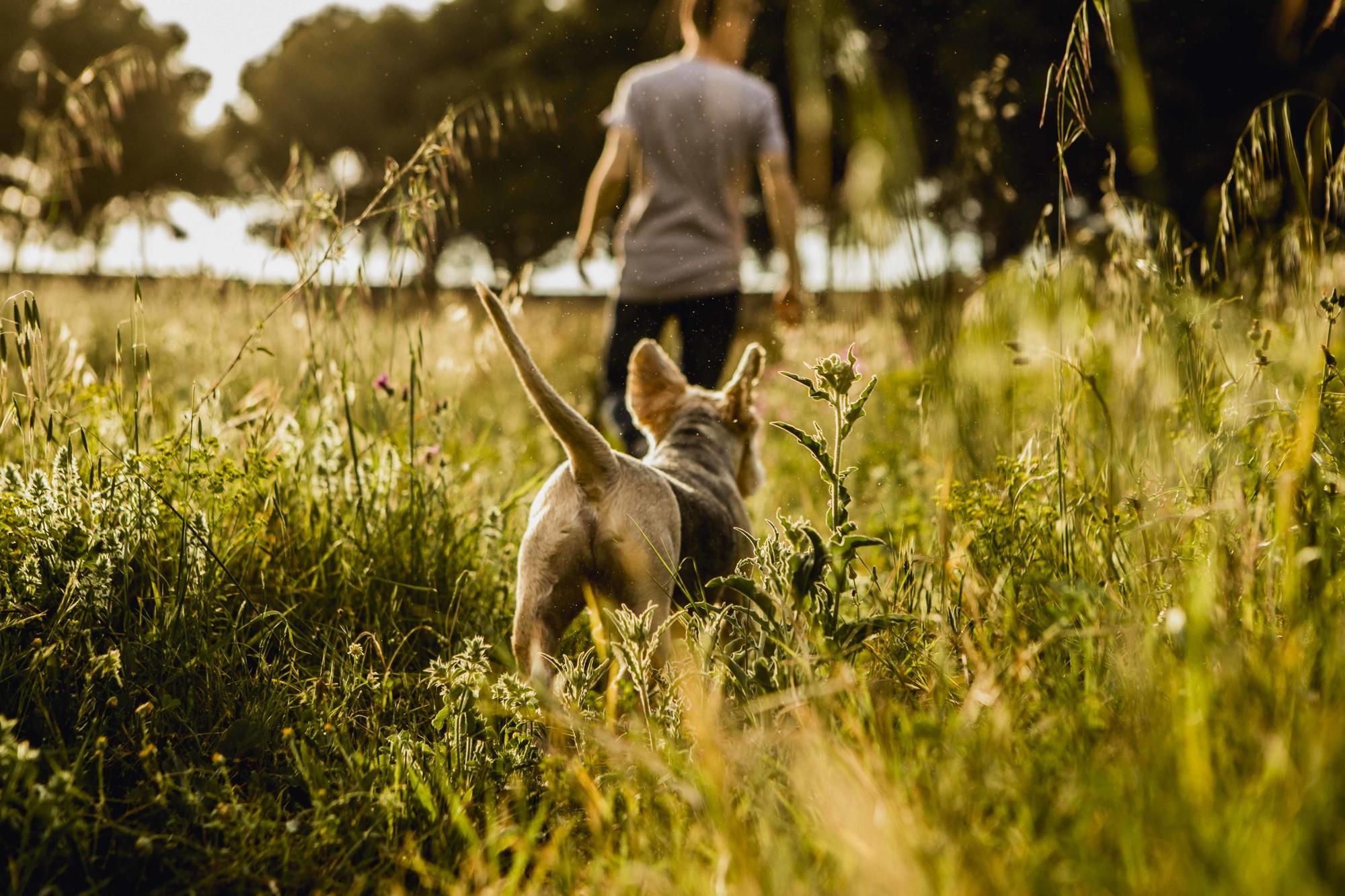Fotografos de perros malaga-3