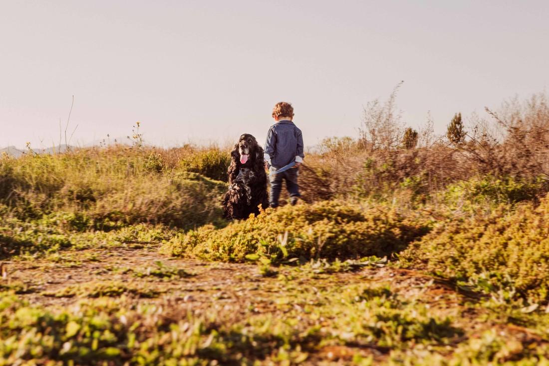 fotografos-de-Mascotas-Malaga--c-fotos-perros-Malaga